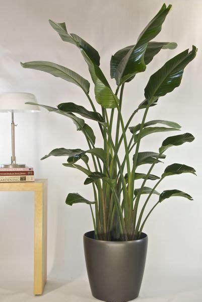 houstons  indoor plant pot store bird