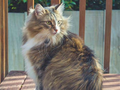 zealand cat transport bringing  importing cats