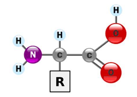 cadenas alifaticas y aromaticas cadena lateral en amino 225 cidos la gu 237 a de qu 237 mica