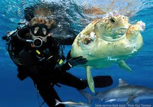 What Is The Description Of A Marine Biologist by Marine Biologist Animal Careers