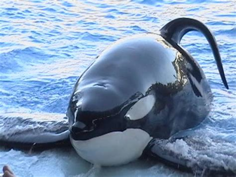 Good In Bed Book Shamu The Whale Picture Of Seaworld Orlando Orlando