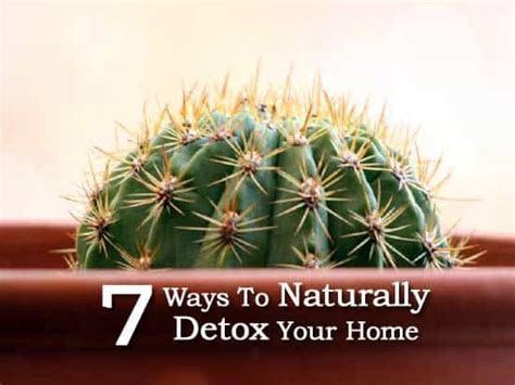How To Detox Your Home Naturally by 7 Ways To Naturally Detox Your Home