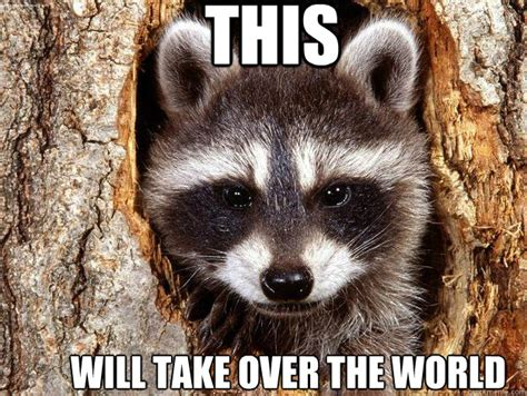 Bad Pun Raccoon Meme - pin bad pun raccoon on tumblr on pinterest