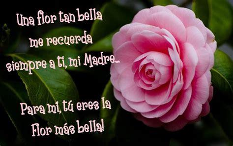 imagenes para dedicar con rosas imagenes de flores con frases imagenes de rosas azules