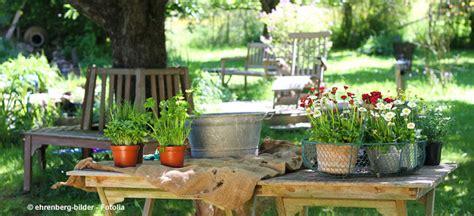 wann pflanzt krokusse pflanzen f 252 r balkon und garten