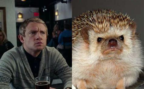 Benedict Cumberbatch Otter Meme - hedgehog martin freeman by bloodkaitou on deviantart