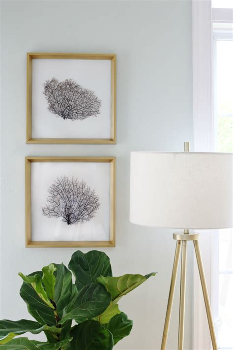 dried sea fans for sale diy framed sea fans adding coastal glam to any room