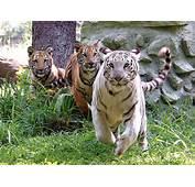 Mysore Zoo  Gaya3 Travels
