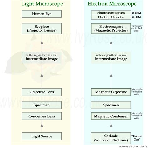 Difference Between Light Microscope And Electron Microscope by Compare Light Microscopes With Electron Microscopes As