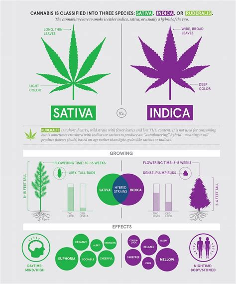 which is better or indica here s the real difference between and indica pot