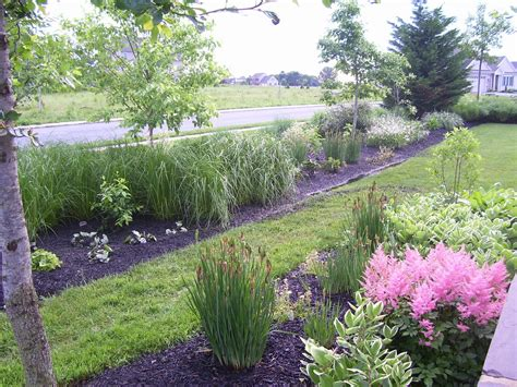 Most Popular Landscape Plants 28 Images Fourth Common Landscaping Plants