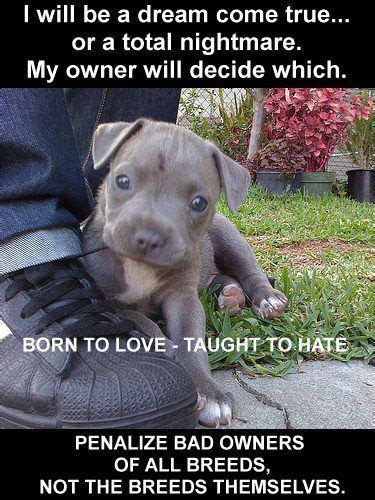 dog not eating your worst nightmare come true simplewag 33 best stand up for pits images on pinterest pit bull