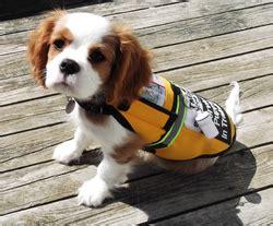 service dogs ma therapeutic alert service dogs blogging
