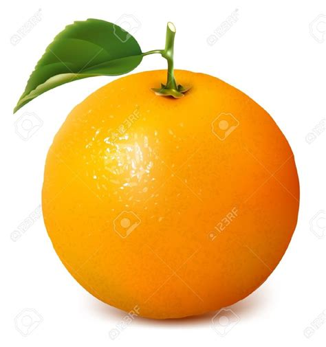 orange clipart orange fruit clipart mandarin orange pencil and in