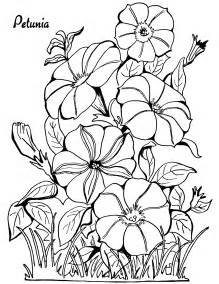 coloring book adults coloring page petunias the graphics