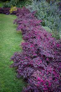 best killer for flower beds 17 best ideas about purple plants on purple