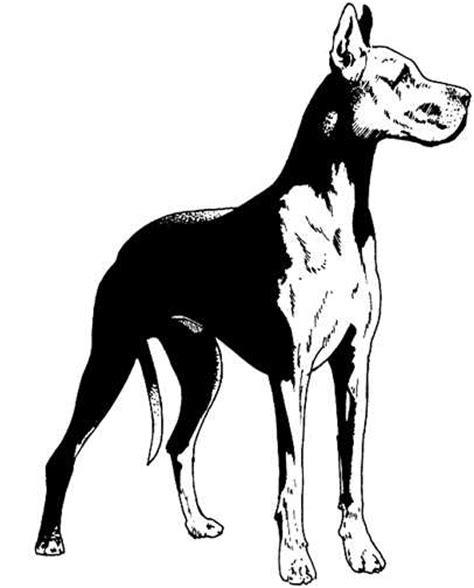 imagenes animadas en blanco y negro perros en blanco y negro perros gif gifs animados perros