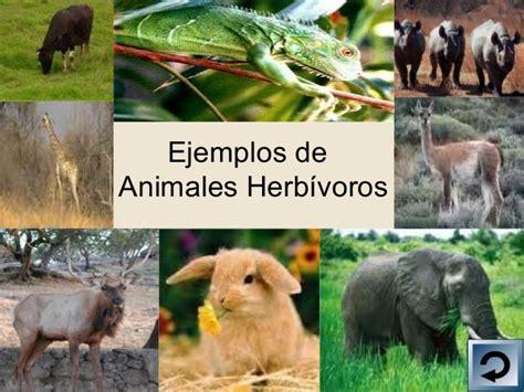 imagenes de animales herbivoros y carnivoros powerpoint animales carn 237 voros herb 237 voros y omn 237 voros