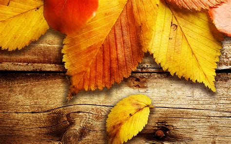 for free free autumn wallpaper 20814 2560x1600 px hdwallsource
