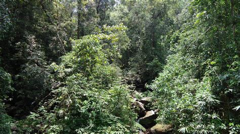 Essay About Sinharaja Forest by Sinharaja Rainforest Essay