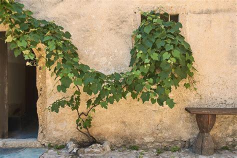 piante e arbusti da giardino 5 ricanti e arbusti per muri all ombra