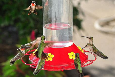 classic hummingbird nectar recipe