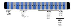 Y Chromosome Microdeletion Detection Kit - Genomed Biotech Y Chromosome Microdeletion