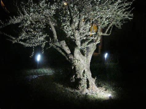 illuminazione alberi faretti led da esterno e da interno illuminazione giardino