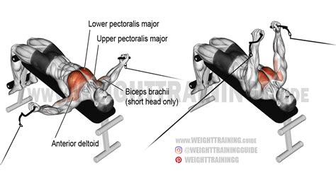 decline bench fly decline cable fly exercise instructions and video weight