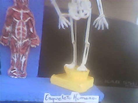 como hacer una maqueta del esqueleto humano maqueta esqueleto humano con material reciclable como