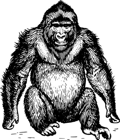 ape clipart ape clip free vector 4vector
