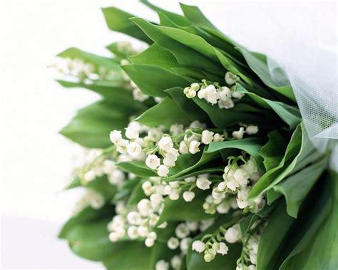 mughetti fiori mughetti piante perenni pianta mughetto