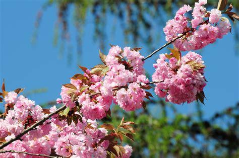 image of spring flowers spring flower nature s seasons photo 22132986 fanpop
