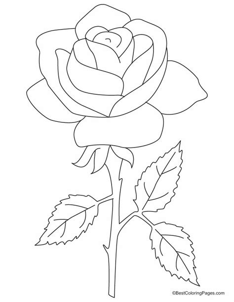 coloring sheet of rose coloring pages rose coloring home