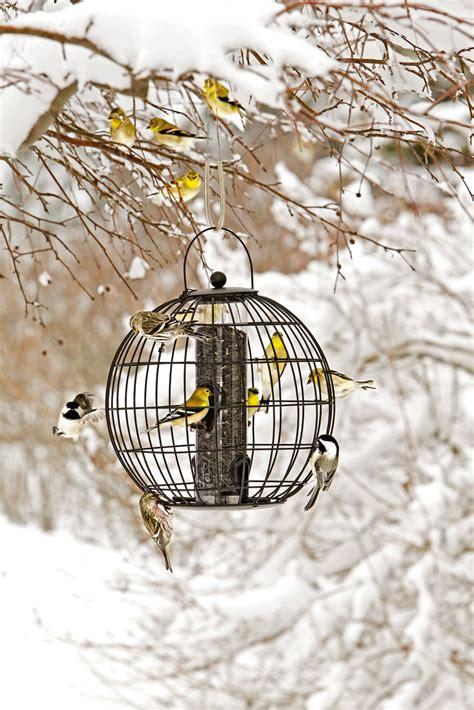 Gardeners Supply Bird Feeders Mixed Seed Globe Cage Feeder Buy From Gardener S Supply