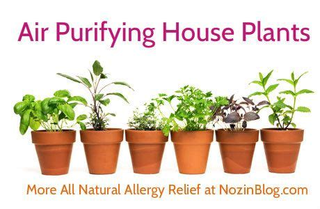 air purifying house plants  natural allergy relief