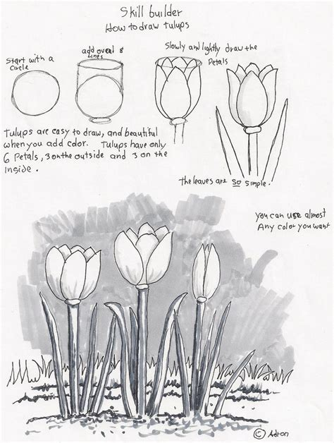 6 Drawing Lessons by Adron S Lesson Plans How To Draw Tulips A Beginners