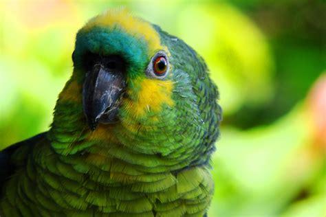 imagenes jpg de cumpleaños conhe 231 a mais sobre os papagaios e porque 233 importante