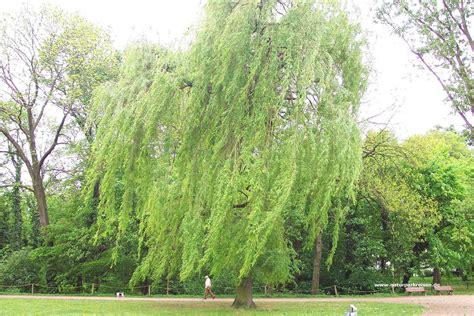 Große Bäume Pflanzen 1471 by Die 69 Besten Gr 252 Ne Hintergrundbilder