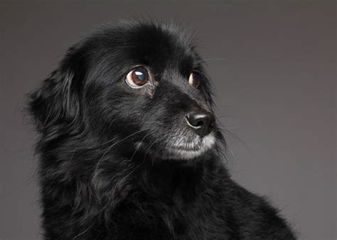 black dogs black are against black pets
