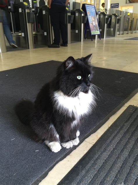 felix the railway cat books railway station cat in west promoted to senior