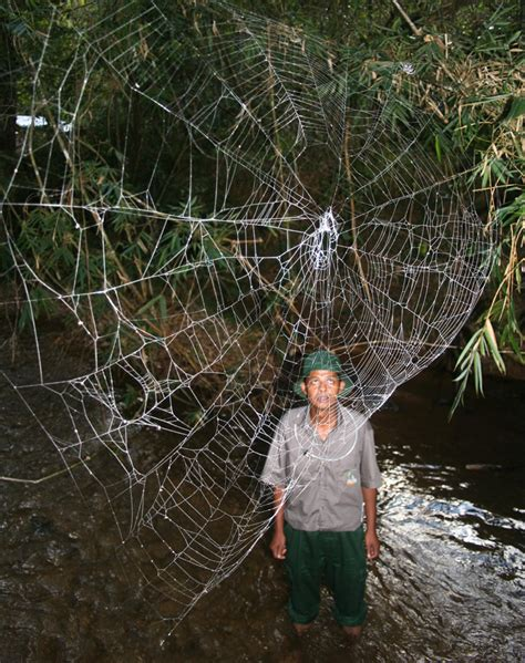 Up What We Found On The Web Last Week by Photos World S Strongest Spider Webs Found