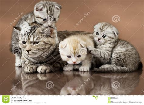 wallpaper of cat family cats royalty free stock photo image 35205525