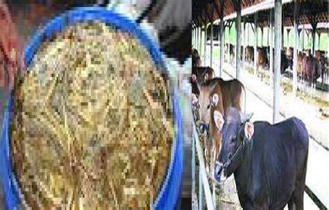 Jual Pakan Ternak Fermentasi ternak sapi jual sapi pakan ternak sapi ternak