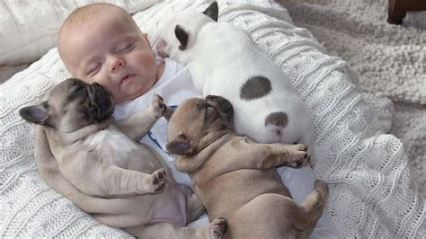 how do dogs babies the baby and the puppies herald sun