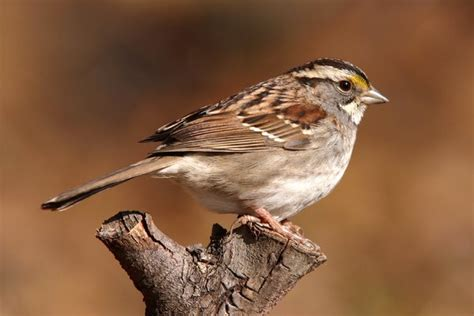 birds found to have emotional reactions to song the new