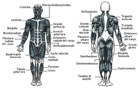 muscoli sedere medicitalia it consulti medici e specialisti pi 249