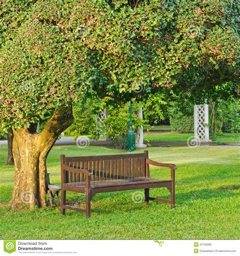 Chair under the tree stock photo image 41109393
