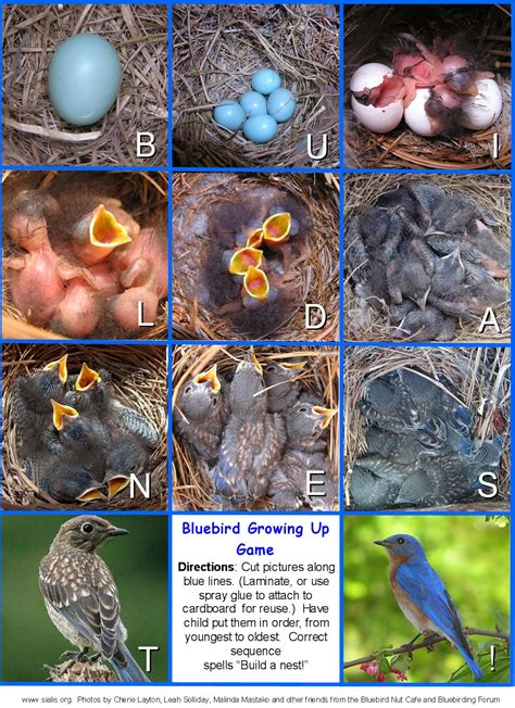 top 28 eastern bluebird cycle eastern bluebird