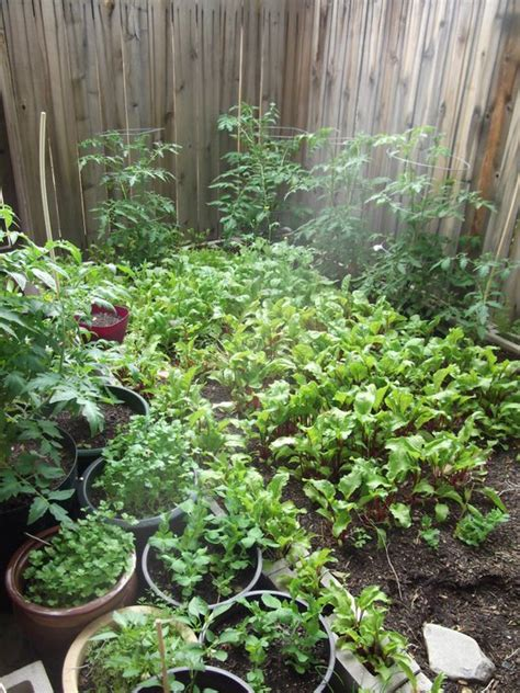 backyard farming on an acre backyard farming on an acre 28 images triyae backyard